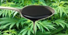 Melaza y Cannabis: Llevando el Suelo al Siguiente Nivel