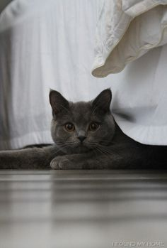 """""""Look, I've been hiding under here for ages and haven't heard you calling for me, or looking for me. You know that really reduces the enjoyment I get out of hiding, don't you?"""""""