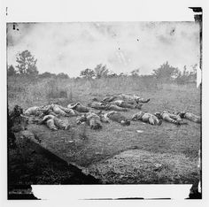 Confederate dead, view looking toward the orchard on the Rose farm, July 5, 1863