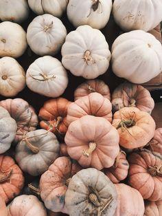 fall pumpkins – DIY World