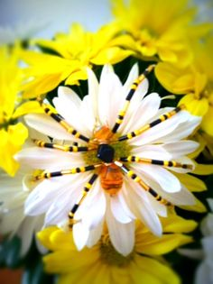 I came up with the idea for this spider after making a beaded honey bee for my Bead Bugs book. I like the stripey yellow bead. Spider Art, Beaded Spiders, Beaded Animals, Beaded Jewelry, Projects To Try, Insects, Plants, Beading, Happy
