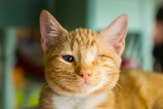 I Photograph Cats And Kittens At The Cat House On The Kings To Promote Adoption