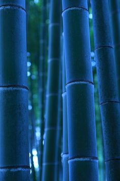 bamboo ~ Someday you must hear the sounds of the wind blowing through a bamboo thicket ...Mystical...