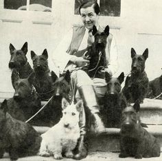 Mrs. Alf. Muriel Levison with some of her famous Scotties circa the early 1930s in Denmark. She was one of the original and most renowned breeders of Great Danes and Scottish Terriers in Scandinavia. Love the striking contrast of the wheaten coated dog amidst his more familiarly dark cousins! The lighter shade was actually her specialty and later concentration. #akcbreedoftheday #scottishterrier