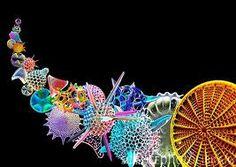 diatomeas microscopio