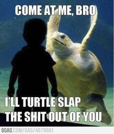 SgtMaj Turtle does this when you put your finger in front of his face in the tank!!!!