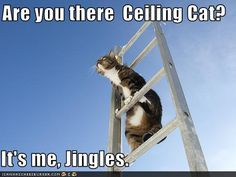 Ceiling Cat?