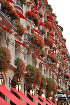 It looks like every one of the buildings in the building has been told to swell in a very nice view. Plaza Athenee Paris, Window Dressings, Natural Wonders, Belle Photo, Windows And Doors, Nice View, Simply Beautiful, Bellisima, Container Gardening