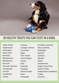 Healthy Dog Treats 39 Healthy Snacks to Stuff in a Kong - Kong stuffing is an easy way to keep your dog busy. Here's 39 healthy snacks Collie, Food Dog, Dog Food Recipes, Puppy Food, Cat Recipes, Puppies Tips, Dogs And Puppies, Doggies, Pet Dogs