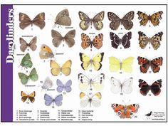 Determineren : Zoekkaarten & Links – Project Love For Bees Diy Patio, Animals Of The World, Fauna, Rooster, Creepy, Images, Butterfly, Kids Rugs, Birds