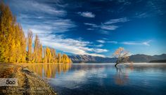 Wanaka Tree in Autumn by scottridley. Please Like http://fb.me/go4photos and Follow @go4fotos Thank You. :-)