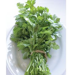 Cilantro/Coriander Seed | Johnny's Selected Seeds