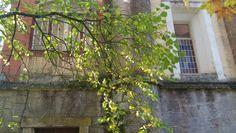 tri...tree