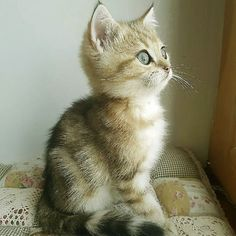 2380 Best Cats And Kittens Images In 2020 Cats Kittens Kittens