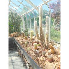 pretty cactus garden at volunteer park
