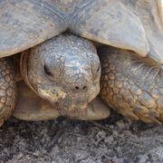Native Plants for Desert Tortoises | eHow