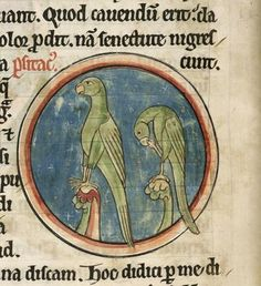 Mediaeval birds - Galleries - Europeana Collections Two parrots from BL Harley 4751, f. 39v