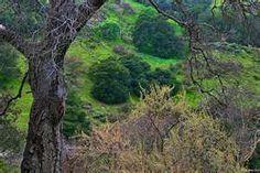 niles canyon fremont california