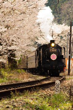 Steam Train Sakura by Carol Scaglia, via 500px