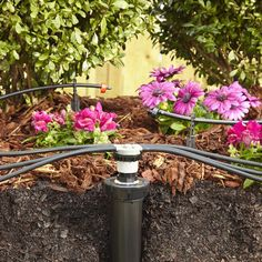 A drip irrigation system lets you make the most of your water to maintain the plants around your home. You can hide much of the system under a layer of mulch as long as you keep any part that emits water on top of the mulch to prevent clogging.