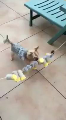 Great idea 👍 I think it& great, again a great idea to keep your dog busy. - Great idea 👍 I think it& great, again a great idea to keep your dog busy. Cute Pug Puppies, Toy Puppies, Cute Dogs, Diy Dog Toys, Pet Toys, Homemade Dog Toys, Dog Enrichment, Dog Puzzles, Dog Games