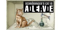 Schrodinger cat