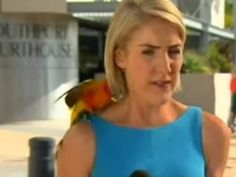 Loro se para sobre hombro de reportera y esta hace un gran alboroto