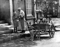 Milk delivery by dog cart, probably around 1910. This was taken at the intersection of Ventura Blvd. and Lankershim Blvd. in San Fernando Valley, California. The milkman is pouring milk into a pitcher.