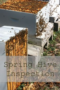 first hive inspection of the season