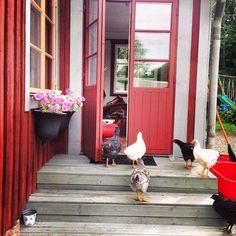 Maatalon elämää..ihmiset käy taajaan ulkona ja eläimet vierailee sisällä.