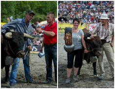 Cow fighting Events in Switzerland
