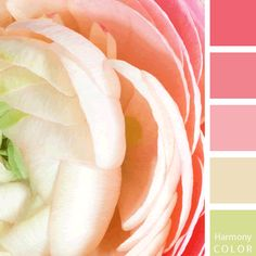 Harmony Color Palette