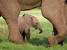 Elephant Experience. Plettenberg Bay Adventures | Thing to do in Plettenberg Bay - Dirty Boots