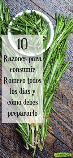 10 Razones para consumir Romero todos los días y cómo debes prepararlo.#saludable #salud #romero #hierbasaromaticas #hierbasmedicinales #hierbas #romero #circulacióndelasangre #fatiga #estimulante #relajante #cerebro #antiinflamatorio #estres #antioxidantes #aceiteesencial