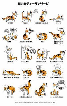 2 猫のボディランゲージ