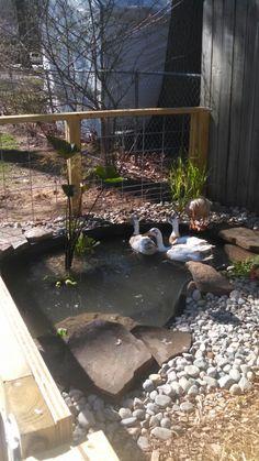 New duck enclosure