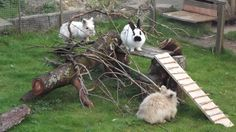 Törpenyúl világ on FB. Rabbit Run, House Rabbit, Rabbit Toys, Bunny Toys, Bunnies, Rabbit Playground, Playground Design, Meat Rabbits, Raising Rabbits