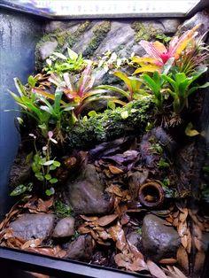 Reptile Room, Reptile Cage, Reptile Enclosure, Leopard Gecko Terrarium, Lizard Terrarium, Geckos, Crested Gecko Vivarium, Iguana Cage, Whites Tree Frog