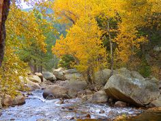 Colorado mountain stream ... Aspens ... LOVE