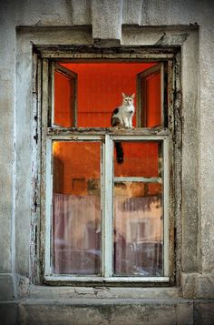 Ana Rosa's Cat in the Window