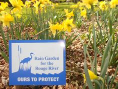 April 9 - My rain garden is more than just a water collection area.  It attracts pollinators, provides 4 season interest and is EASY to maintain.  For questions about rain gardens go to: http://www.raingardennetwork.com/
