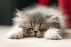 Cats, and more about cats of course. We Love Cats! Kittens And Puppies, Cute Cats And Kittens, Kittens Cutest, Pretty Cats, Beautiful Cats, Animals Beautiful, Crazy Cat Lady, Crazy Cats, Cute Baby Animals