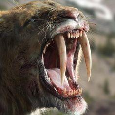 The Ice Age giants of North America Last updated May A CGI image of a sabretooth tiger Sabretooth Tiger, Vida Animal, Strange Beasts, Big Teeth, Extinct Animals, Prehistoric Creatures, Ice Age, Fauna, Himalayan