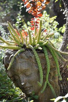 Trailing cactus