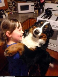 The Happiest Bernese Mountain Dog In The World ::: Visit our poster store Rover99.com #BerneseMountainDog