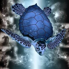.... Schildkröte