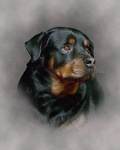 drawing of a Rottweiler beautiful work