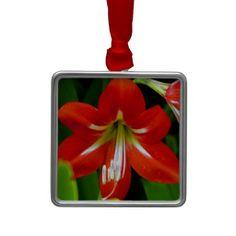 Lovely Amaryllis Christmas Ornaments
