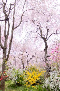 Haradani-en Kyoto 原谷苑
