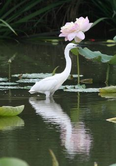 I am not sure why, I have been loving egrets since last year!